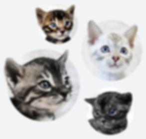Peace Home Bengal Kitten (3).jpg