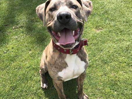 Training a Rescue Dog