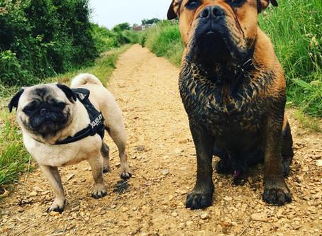 Do You Need A Dog Trainer Or A Dog Behaviourist?