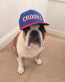 Well trained Dog with a baseball cap