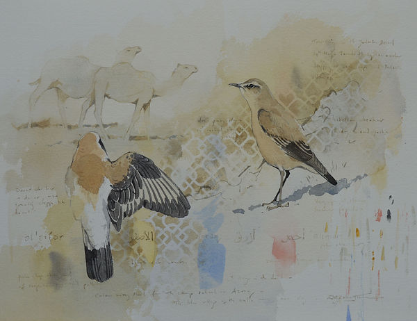 colour of the wheatears.jpg