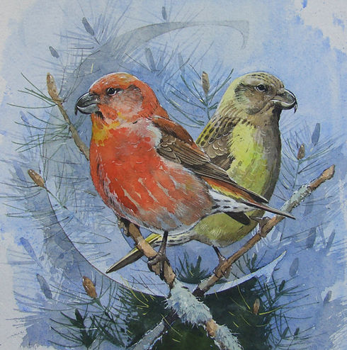 Scottish Crossbills.jpg