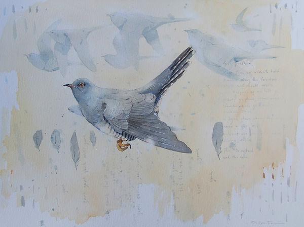 Cuckoo Gowk Craig.jpg