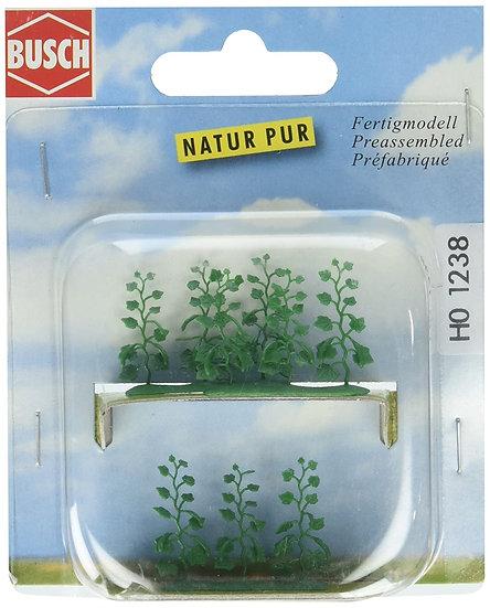 Busch 1238, Pack de plantas de pepino (HO)