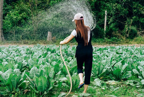 Basics of Irrigation | Methods of Irrigation
