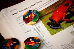 Small Strawberry Dart Frog Buttons