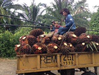 Where is our OKONATUR Palm oil coming from?