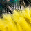 Thumbnail: OSHUN Abanico | Peacock Feather Hand Fan
