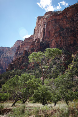 Zion National Park_096