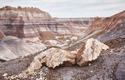 Petrified Forest - 33