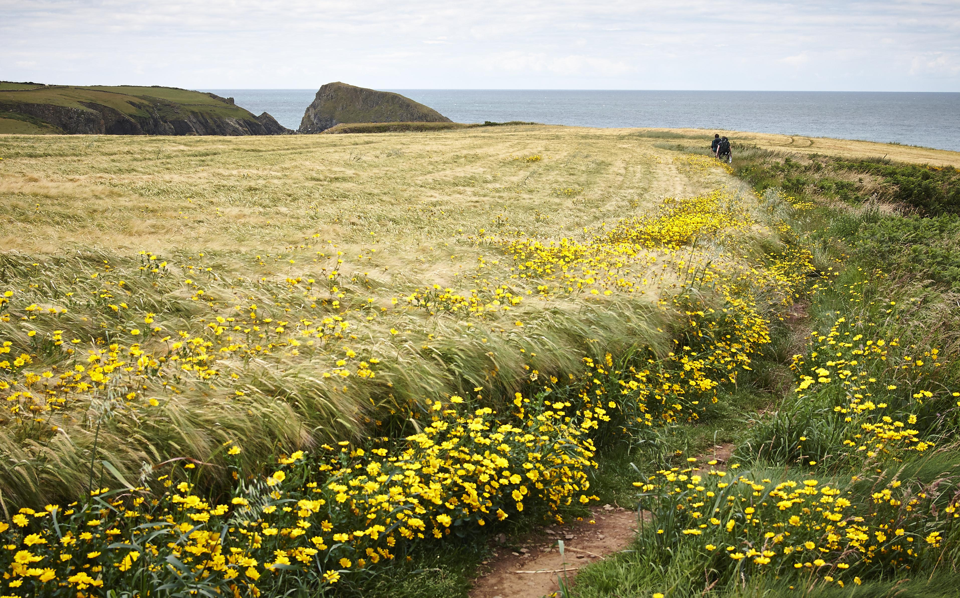 Pembrokeshire - 021