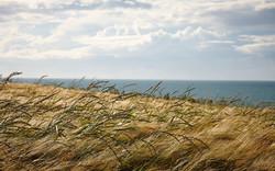Pembrokeshire - 028