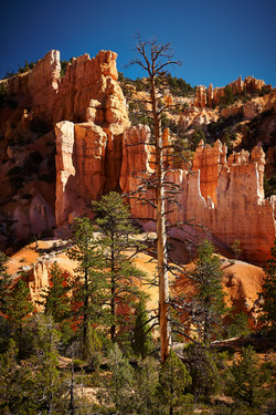 Bryce Canyon_230