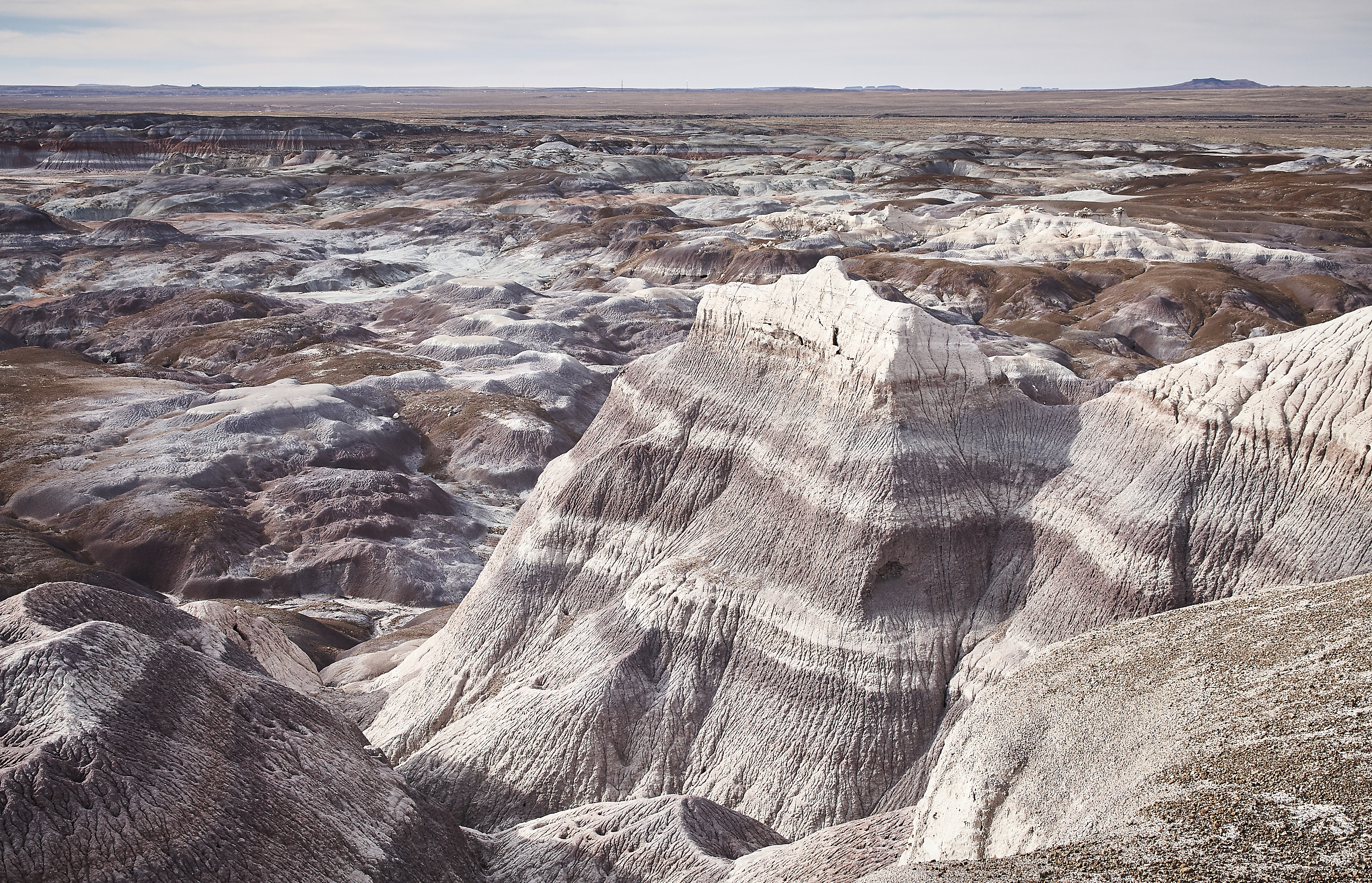 Petrified Forest - 60