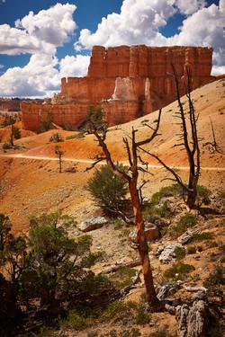 Bryce Canyon_295