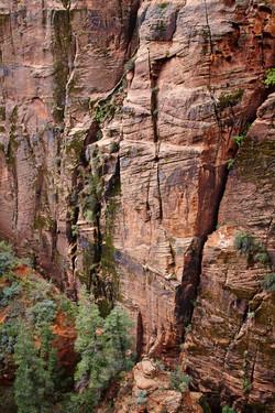 Zion National Park_012