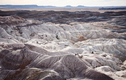 Petrified Forest - 65