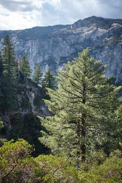 Yosemite 2017 - 119