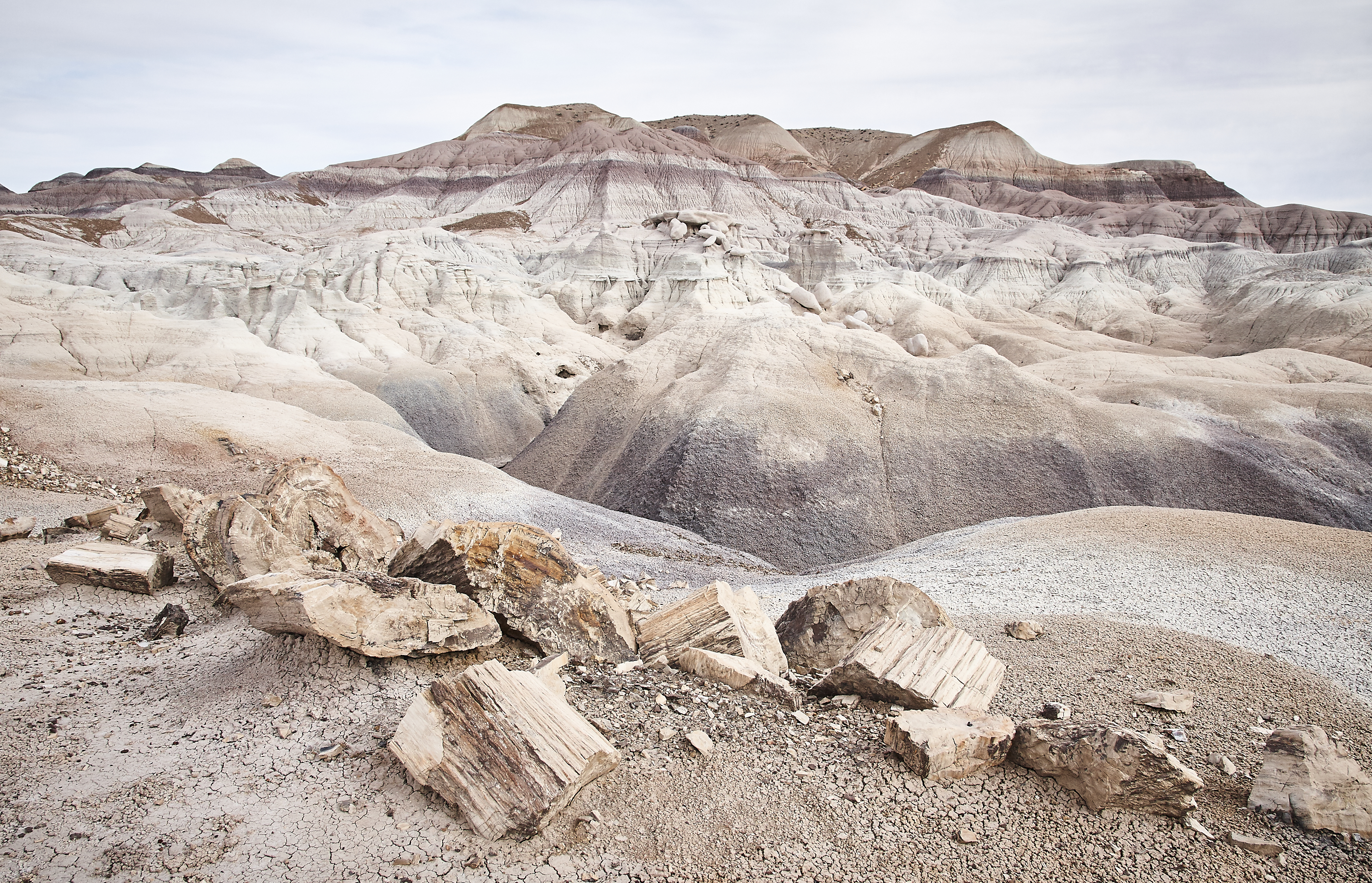 Petrified Forest - 21
