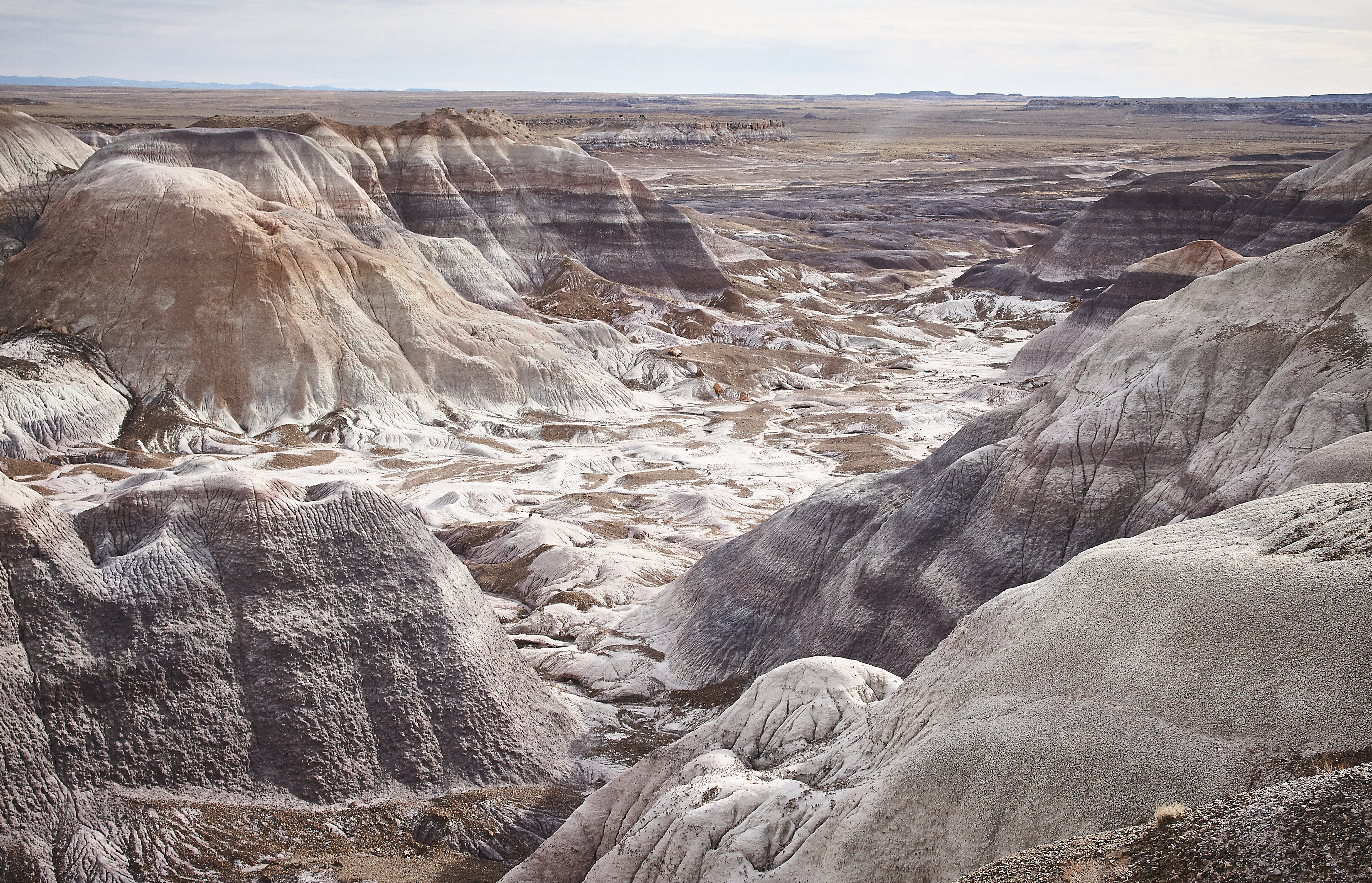 Petrified Forest - 42