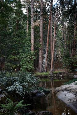 Yosemite 2017 - 46