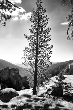 Yosemite_088