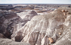 Petrified Forest - 47