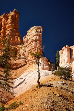 Bryce Canyon_227