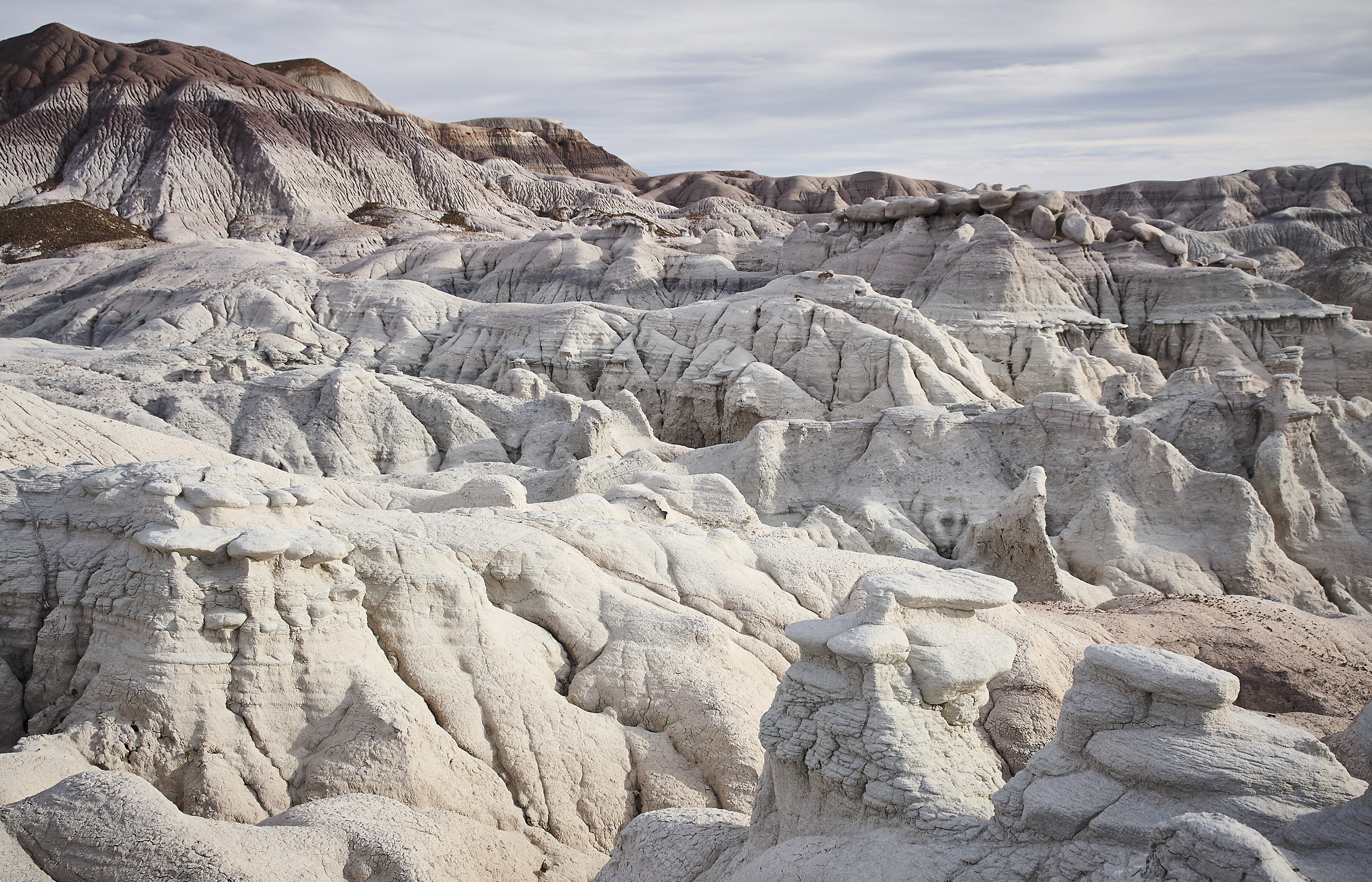 Petrified Forest - 75