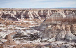Petrified Forest - 61