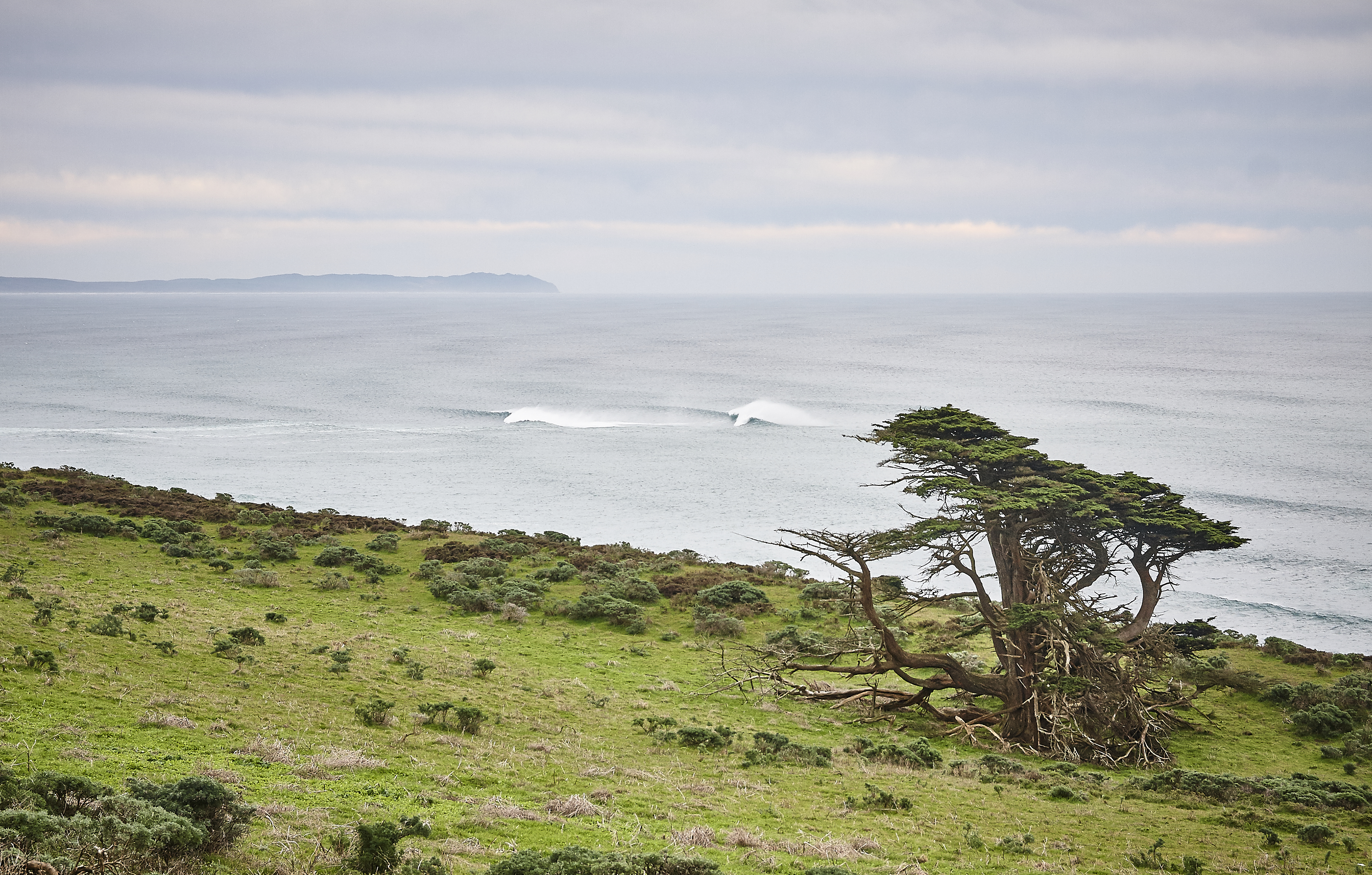 Tomales Point - 016