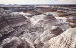 Petrified Forest - 55