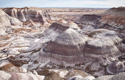 Petrified Forest - 63