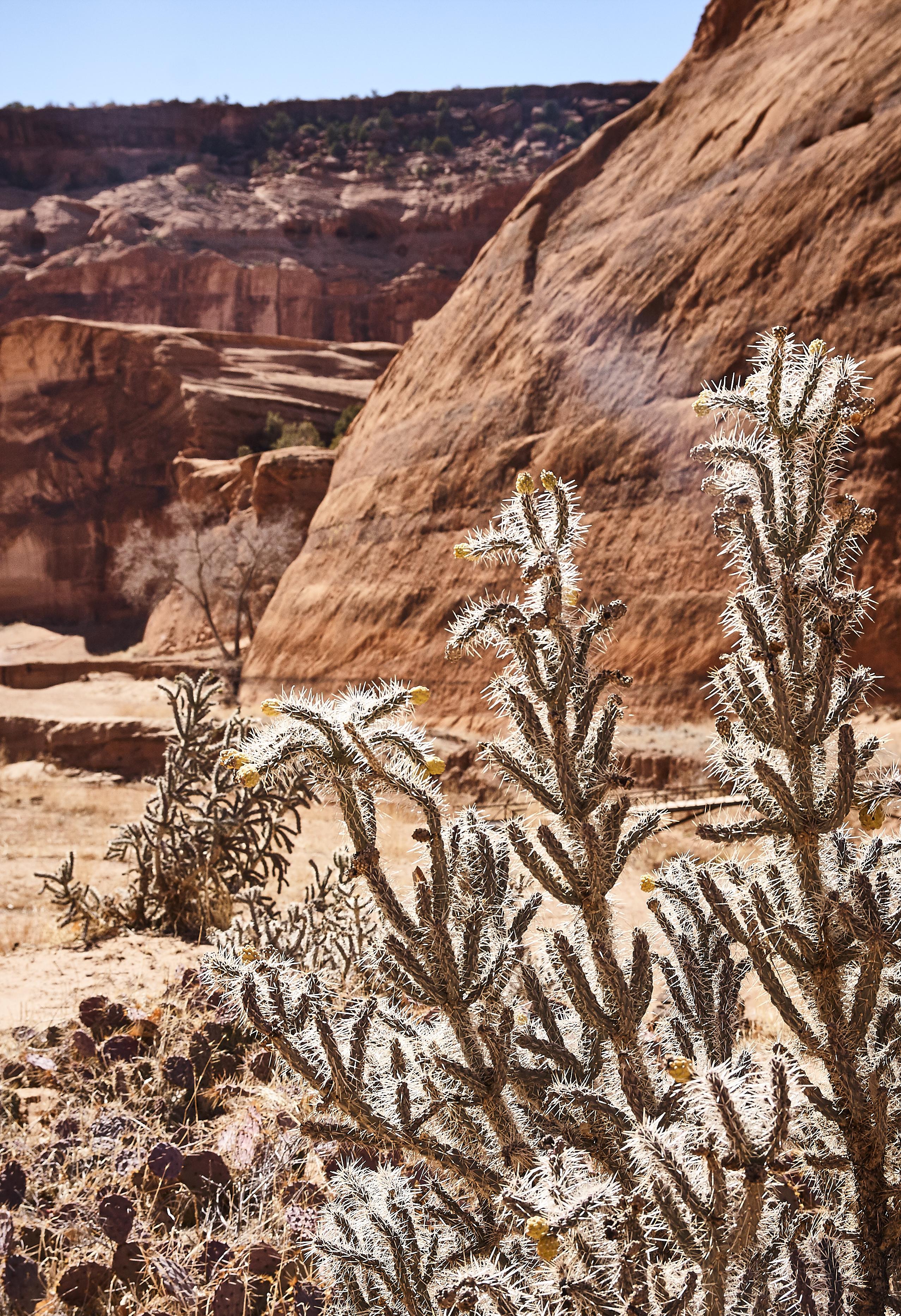 Canyon de Chelly - 35