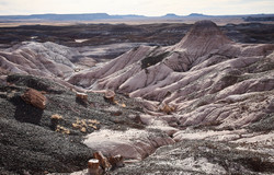 Petrified Forest - 72
