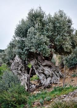 Mallorca, Day 2 - 048