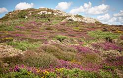 Pembrokeshire - 076
