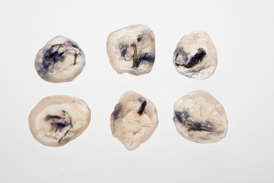 BLUEBELL FOSSILS