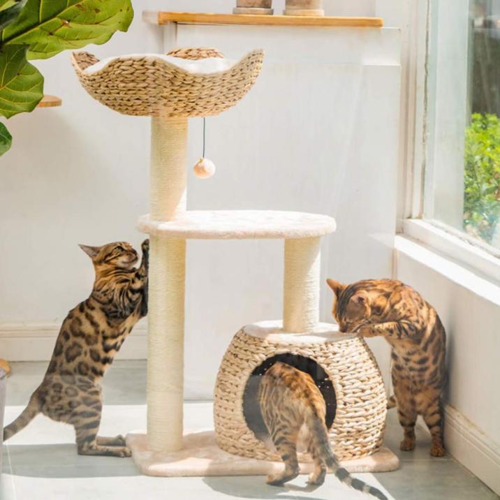 روتين وترفيه القطط