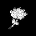 Montagne-noire-yoga-lotus1.png