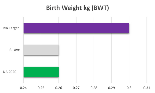 Birth Weight kg.png