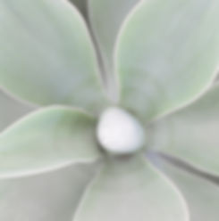 succulent-jeanni-dunagan-photography.jpg