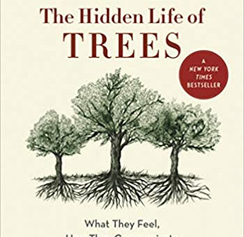 Do Trees Communicate?