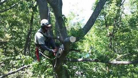 Tree Pruning Asheville