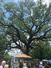 asheville tree sevice