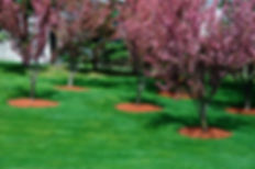 Asheville Lawn Care Service