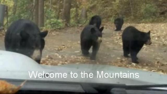 Asheville Bears