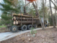 asheville tree removal