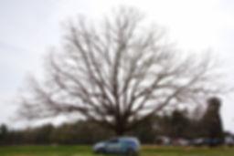 asheville-arborists-car-S.jpeg