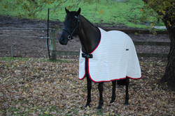 S8 PADDOCK HORSE RUGS  NAVY/RED